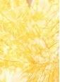 Tadashi Shoji Elbise Sarı